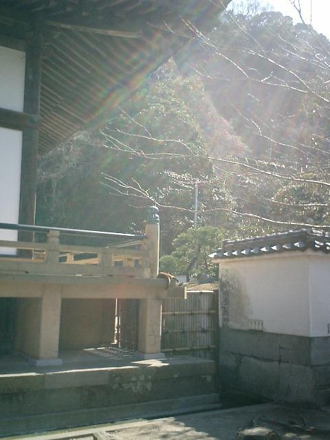 11)鎌倉市材木座「光明寺」改修後の縁側はコンクリート製になったのだけれども、'トラシマ2号'の心地よい気持ちがわかる。私だけかもしれないが、コンクリートの上へ寝転ぶと妙に?気持ちが静まってまどろんで